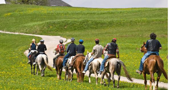 קורס סוסים